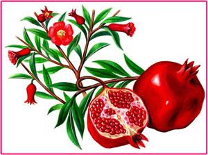 Гранат, плоды, цветы