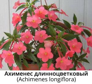 Комнатные цветы дружная семейка