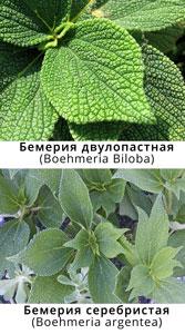 Бемерия